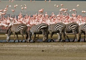 4-Days-3-Nights-Budget-Camping-Safaris-Tarangire-Serengeti-and-Ngorongoro-Crater